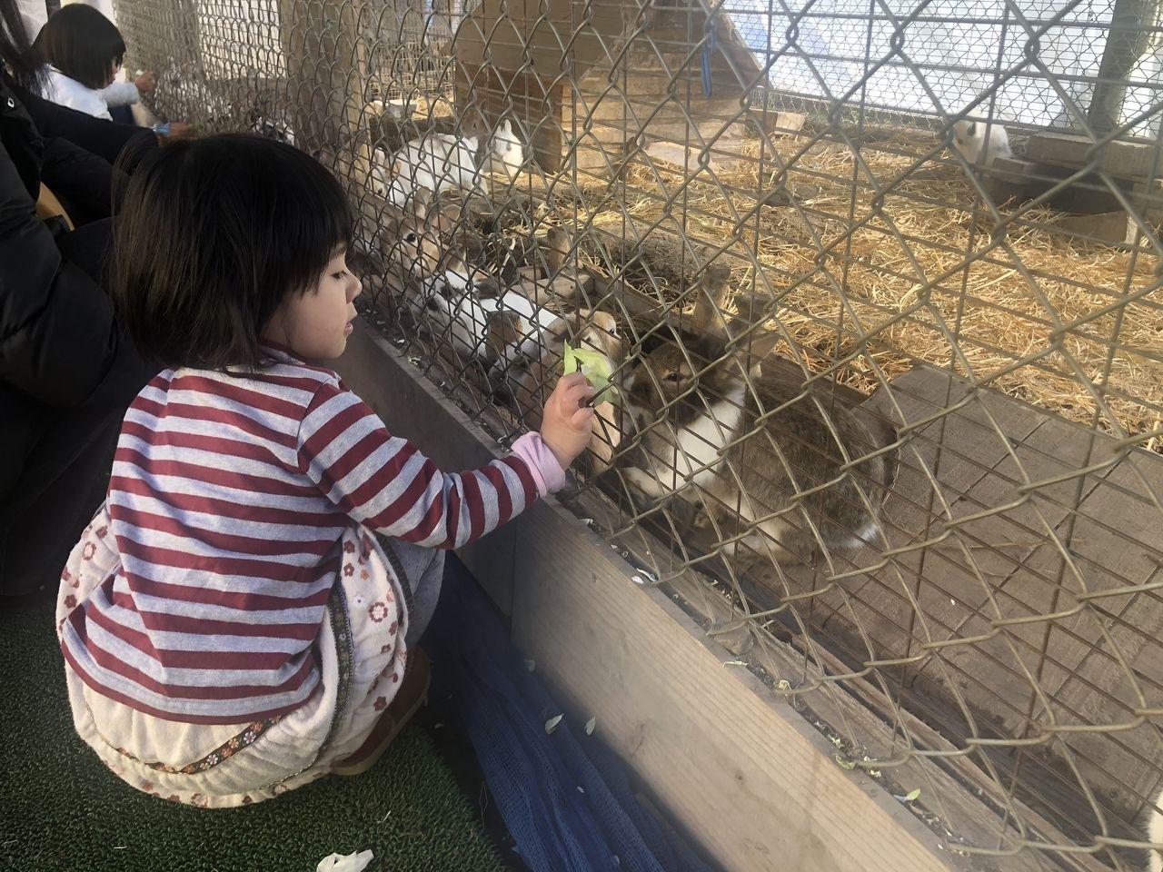 宮崎県都城市吉之元町「霧島たまご牧場」うさぎを触れ合えます。餌も売っています。