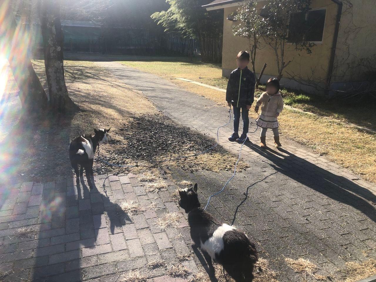 宮崎県都城市吉之元町「霧島たまご牧場」うさぎを触れ合えます。放し飼いです。