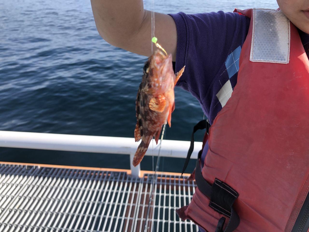 鹿児島市与次郎2丁目「鴨池海づり公園」やっと釣れた一匹目です。