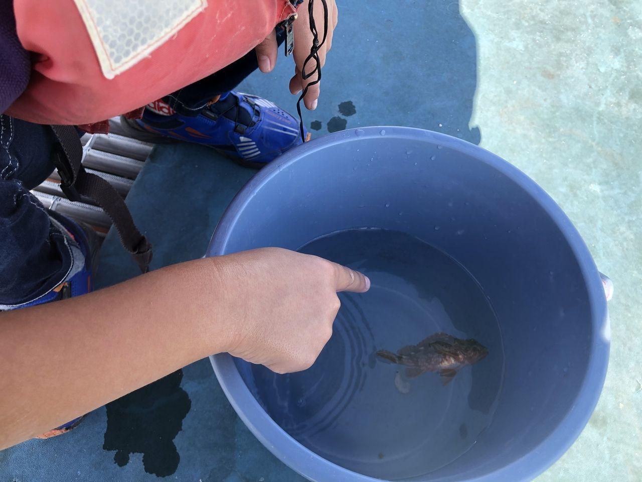 鹿児島市与次郎2丁目「鴨池海づり公園」釣れた一匹をバケツに何度も見に行く息子