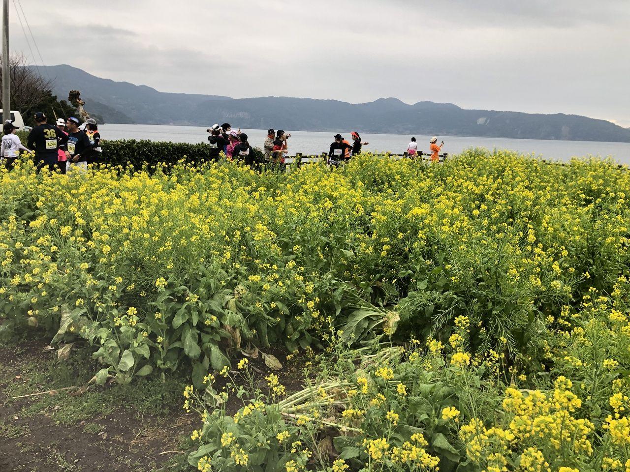 第39回いぶすき菜の花マラソンの途中で風景を写真撮影をしています。